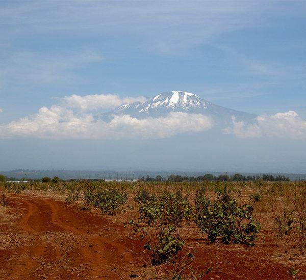 Mont Kilimanjaro 2005